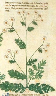 plants Herbal-pharmaceutical Nicolai