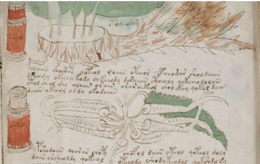 Voynich bit leaf-and-root fols